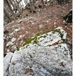 Stone in beech forest